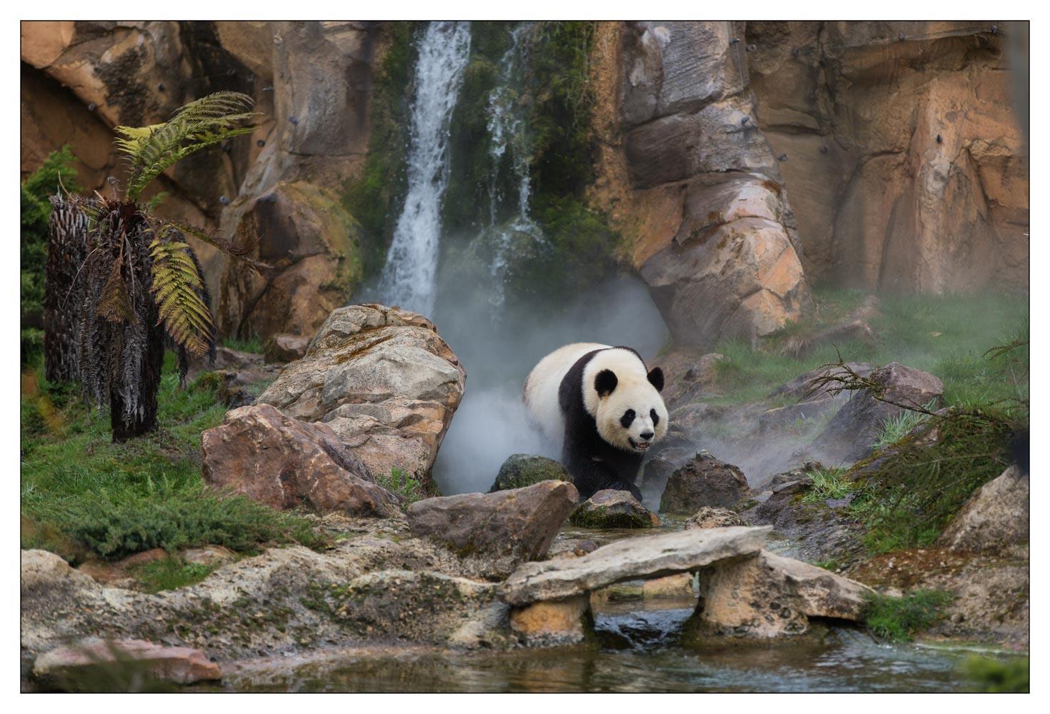 Zoo de Beauval - Loir et cher